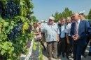 FOTO. Viticultori din 18 raioane ale țării au participat duminică la Festivalul național al strugurelui