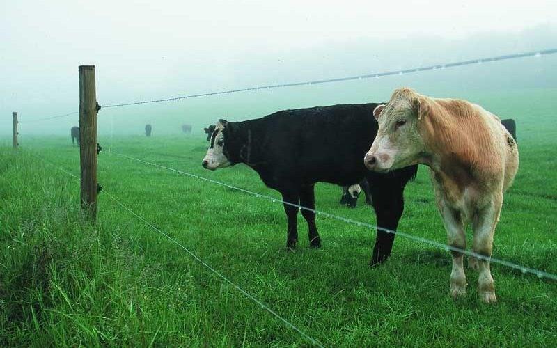 Cum se instalează un gard electric pentru animale