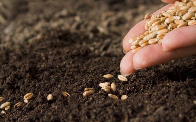 Timac Agro East: Cum ne pregatim pentru campania de toamna la cereale