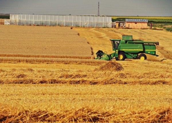 Producția de grâu a României a depășit 8 milioane de tone