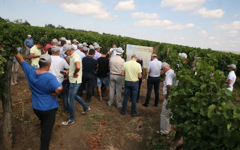 """FOTO. Zeci de viticultori din țară au participat la un seminar Bayer organizat pe moșia """"Podgoreni"""" SRL"""