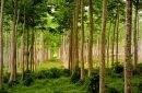 UE susține silvicultura energetică în Republica Moldova