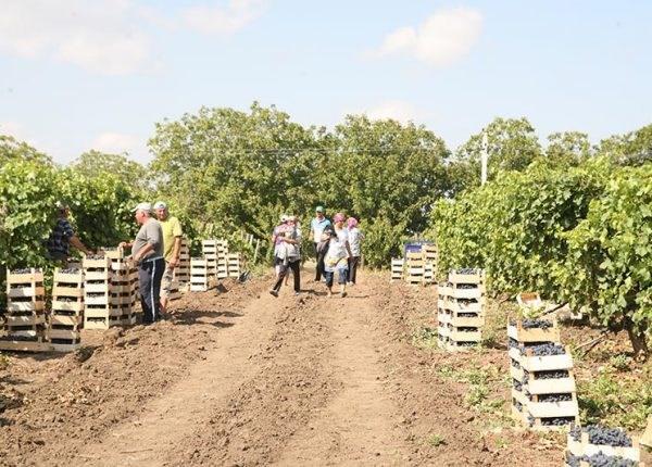 Activitatea muncitorilor din domeniul agriculturii (zilierilor) va fi reglementată de o lege nouă
