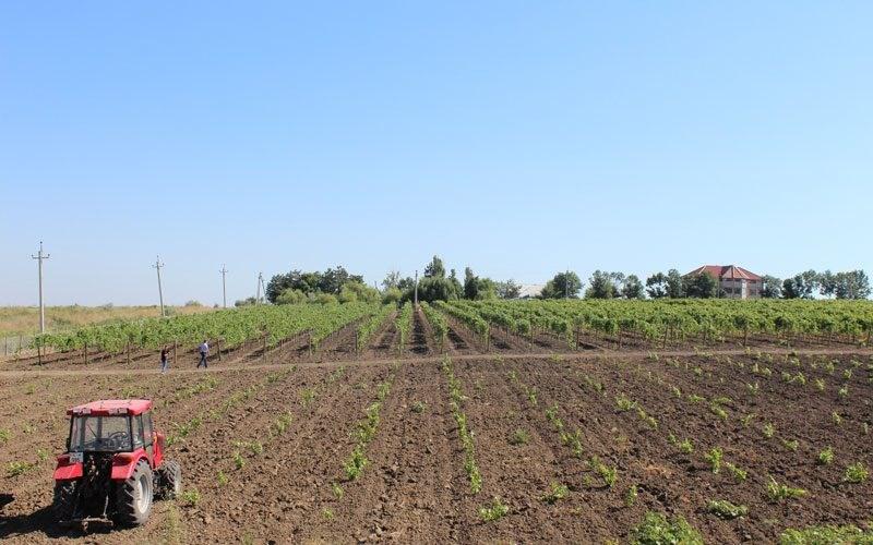 Expert-Grup este în căutarea unui consultant în politici de subvenționare a agriculturii
