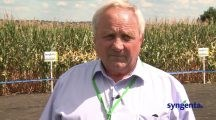 VIDEO. #TestimonialSyngenta: Gheorghe Talpă – fermier din Valea Mare, Ungheni