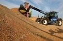 De ce România este outsider în competiția cu Rusia pe piața internațională a grâului