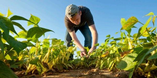 PIN angajează experți regionali și internaționali în agricultura ecologică