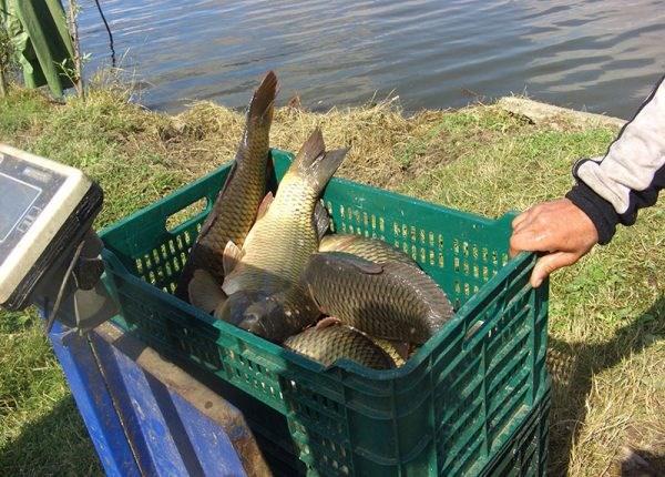 """La Nimoreni va fi organizat pentru prima dată """"Festivalul Peștelui"""""""