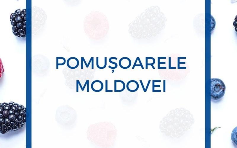 Au fost lansate discuții publice privind omologarea materialului săditor în Republica Moldova