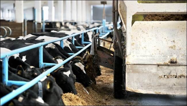 Planul FAO pentru reducerea răspândirii rezistenței la antimicrobiene în fermele și alimentele noastre