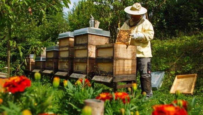 Afaceri cu albine: Sfaturi la cumpărarea familiilor pentru stupină