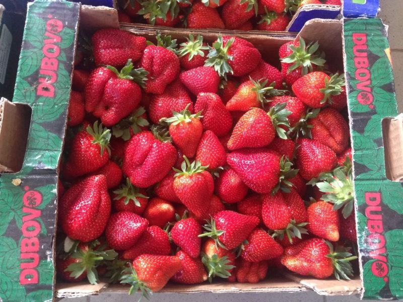 viziune de căpșuni)