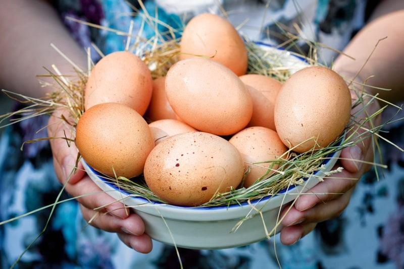 ouă de pui și vedere)